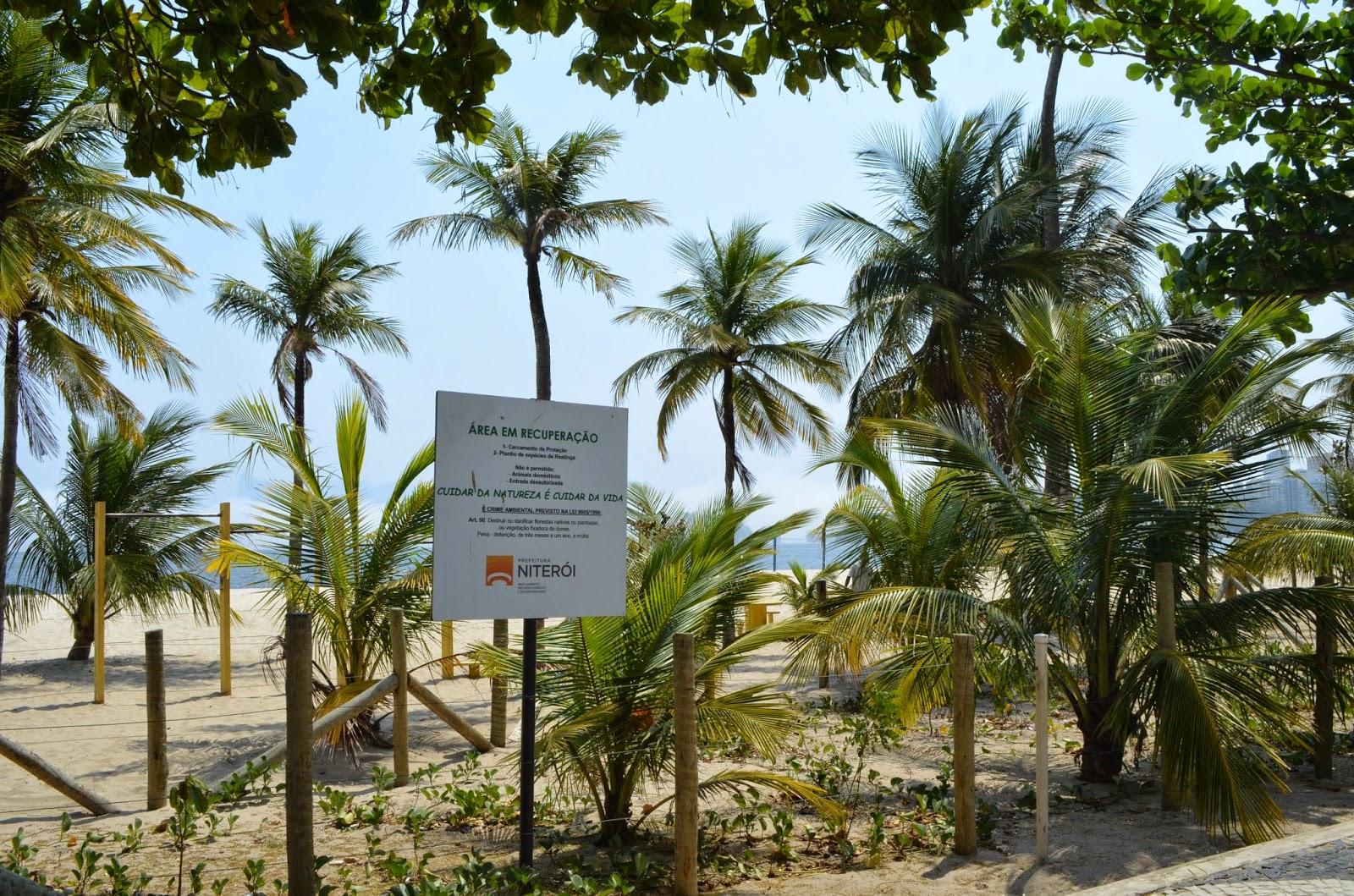 Praias recuperam as restingas