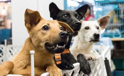 Niterói tem feira virtual para adoção de cães e gatos neste sábado