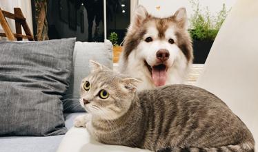 cachorro e gato Hospital veterinário da UFF retoma atividades